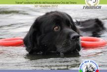 Dog Heroes - Cani Eroi / Pets that are focused to improve our life - Pet Therapy; - Sea Rescue; - Ruin Rescue; - Dogs that helps during investigations