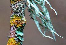 the understorey of lichen and moss