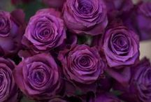 Donker paarse bloemen
