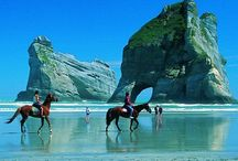 Hoiho / Horses from everywhere... beautiful