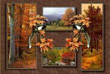 """Évszakok: Ősz / """"Egyszer csak, észrevétlenül  A fa alá avarszőnyeg kerül.  Megállsz a mélázó napsütésben,  Gyönyörködhetsz az őszi ködben.  Ezer színnel festett képek,  Mind a szívedbe égnek.  Nincs még egy évszak,  Mely ennyi pompát rejt  Fejedre kedvesen gesztenyét ejt.  Nézheted a vadludak vonulását  Ahogy őz keresi tisztáson a párját,  Szürettől hangos a hegyoldal  Itt, ott felcsendül egy dal.""""  (Ady Endre)"""