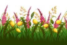 Virágok levelek növények / minden ami növény...