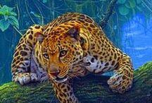 Nagymacskák - Big cats