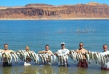 Fishing in the Southwest / Fishing news and images for the United States Southwest including: Arizona, California, Colorado, Nevada, New Mexico, Oklahoma, Texas and Utah.