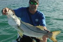 Snook Fishing / Fishing photos and fishing information on common snook, small-scale fat snook, large-scale fat snook, swordspine snook, and tarpon snook.