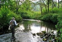 Fly Fishing / All things fly fishing are collected on this board - feel free to contribute your own.