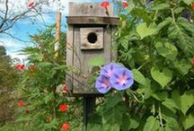 Birds/Birdhouses/Bird Feeders everything related to Birds / I love birds of all kinds. I own 2 parekeets and used to have several canaries and finches that I raised from eggs. / by Elaine Plant