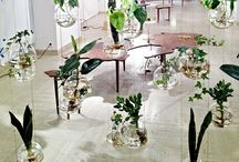 Indoor Greenery / All about house plants  / by Green Obsessions
