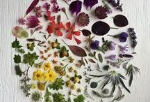 Botanics / Daily inspiration from our natural world