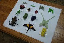 Origami : insectes