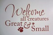 ALL ANIMALS / Welcome to ALL ANIMALS Veterinary Hospital