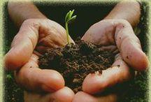 Fertilizers for a healthy garden