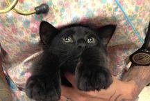 Poly cat / Cat