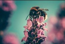 Weddingbees / Hochzeit im Zeichen der Biene!