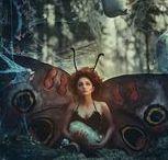 Motyle i inne owady...