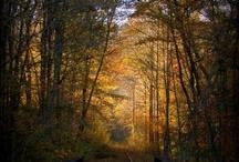 West Virginia / by Harriet Simons