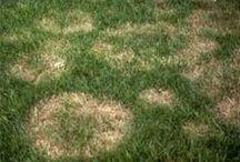 Lawn Disease  / by TruGreen