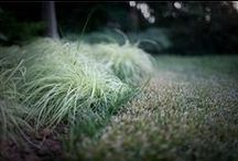 Lawn Treatment / by TruGreen