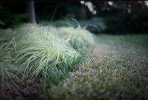 Lawn Treatment / by TruGreen