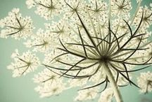F L E U R S / ... organic ... nature ... garden ... / by Binki Borg