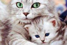 ☆Cats <3☆ / I realllyyyy reaaalllyyy love cats! Beautifull, funny, loving creatures