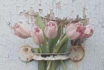 ☆Flowers, Plants & Friends☆ / It's the smell of spring!!!