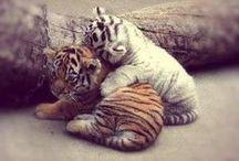 ANIMALS / I Love all Animals / by Beverlie Jean