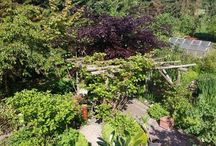 Rainer / Unser Garten