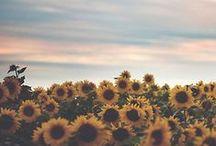flowery life