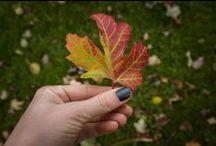 Autumn / inspiration, autumn, season, cosy, interior
