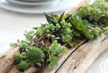 Decor / Trang trí nhà cửa, trồng cây, thiết kế vườn...