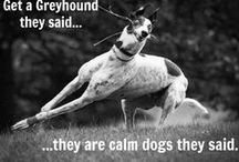 Sighthounds / by Beth Moore
