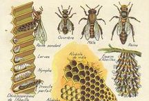 Bees and Beekeeping / For the love of bees.