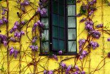 colors mix inspirations