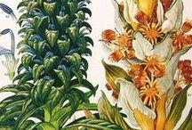 Naturalistic prints