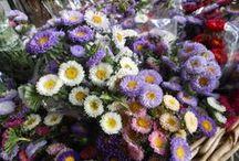 Mercado de Flores / visita nuestra web www.floresonline.com.ar