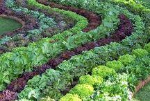 Garden Ideas / Mostly garden ideas - outdoor and indoor gardening tips and musings.