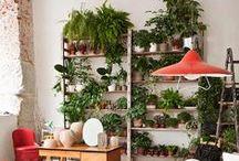 Garden / flora, vegetal, plants, plant installation, gardens, greenery, parks, woods etc.