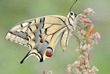 Bees, Butterflies and Dragonflies / by Marilyn