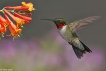 Beautiful Hummingbirds / Among nature's finest work of art!  / by G. A. Odell