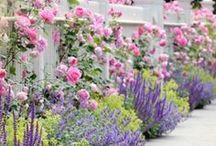 Gardening / by Jeanne Buntin