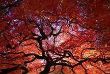 Take my Breath Away....... / by Debbie Bruner