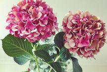 Flowers / I love flowers. With flowers, I feel good.