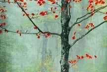autumn trees / by Cali Clark