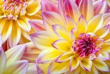 fleurs / by Cali Clark