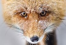 foxy / by Cali Clark