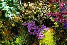 Gardens / by Ruth Kelly