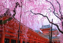 Spring|KYOTO