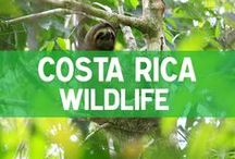 Costa Rica Wildlife / All about the wildlife in Costa Rica including guides, tips and photos. www.mytanfeet.com