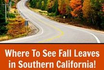 SoCal Fall Events / Fall family events and outings in and around Southern California.